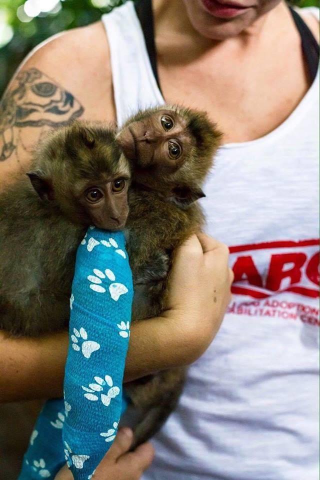 almond-macaque-crabier-battu-bali-6