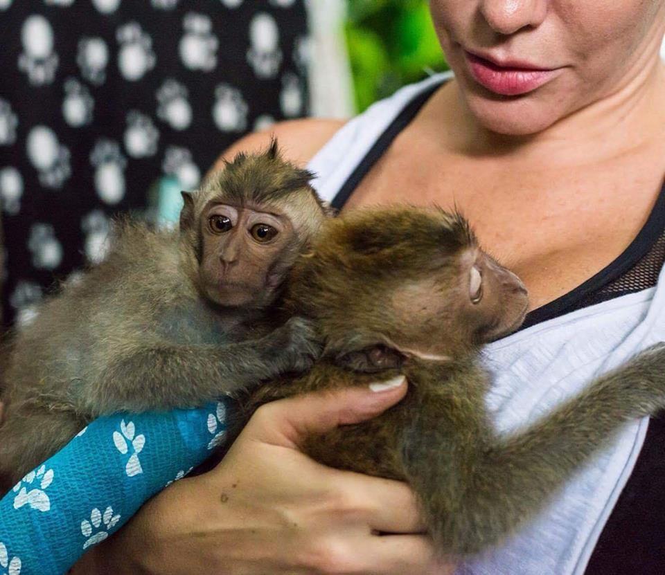 almond-macaque-crabier-battu-bali-7