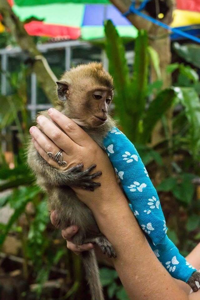 almond-macaque-crabier-battu-bali-9