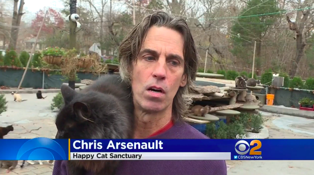 arsenault-cat-sanctuary-6