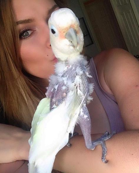 calypso-perroquet-4