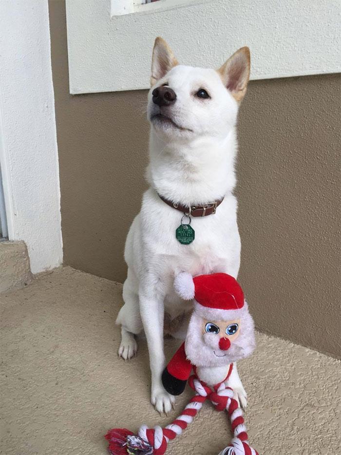 chien-jouet-pere-noel-3