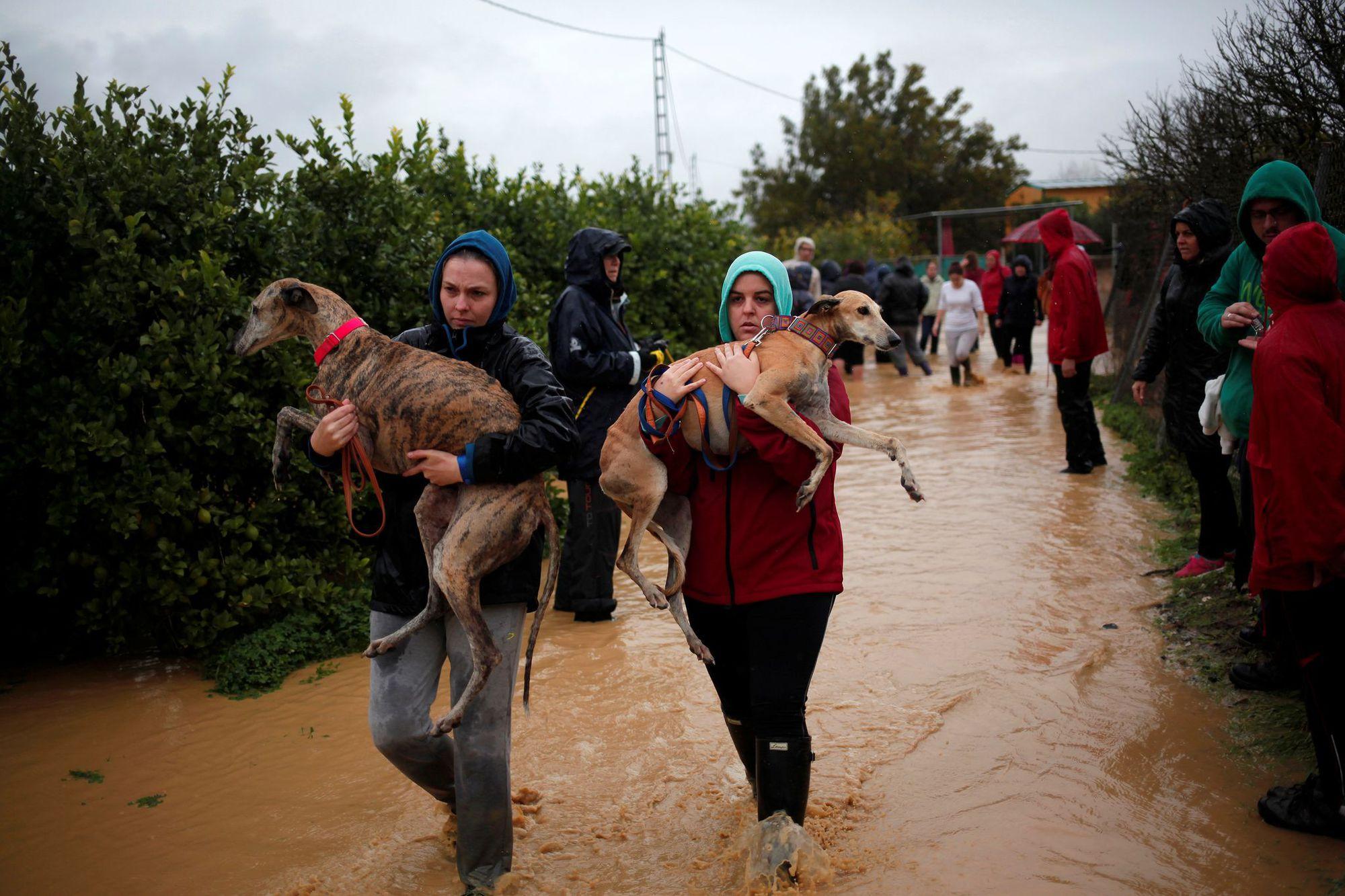 espagne-inondations-chien-1