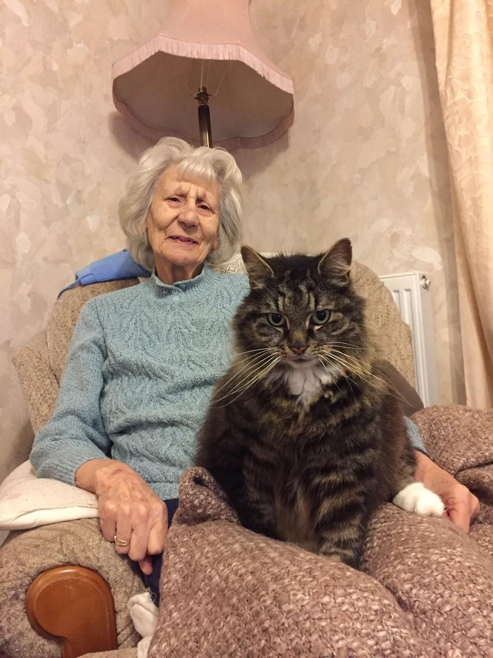 grandmastella-cat-1