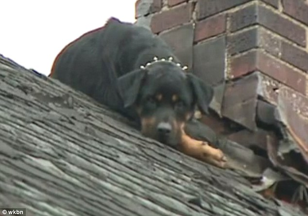 isis-rottweiler-2