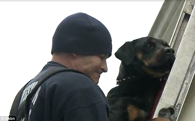 isis-rottweiler-4