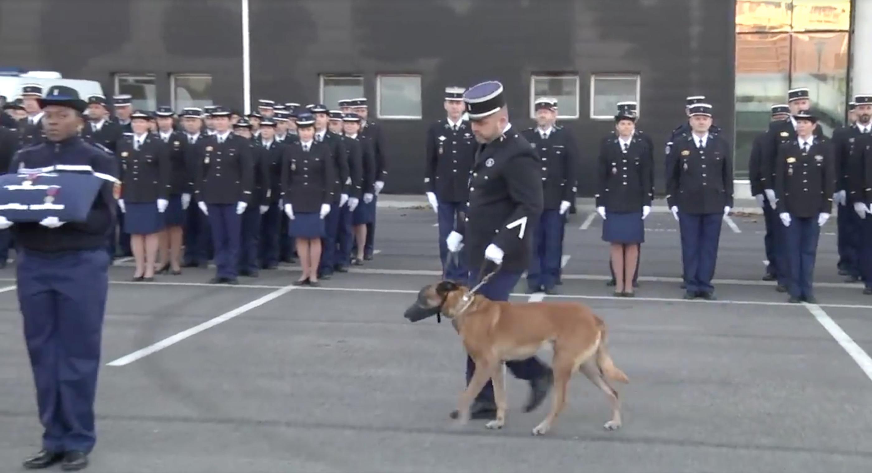 officier-montpellier-chien-decoration-malinois-5