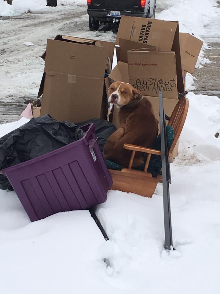 ollie-loo-chien-jete-ordures-1