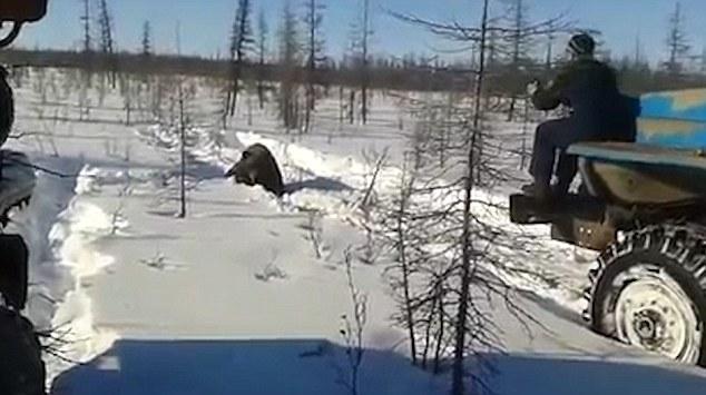 russia-bear-truck-1