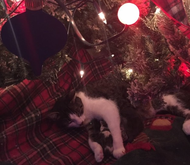 tink-chat-chatons-noel-5