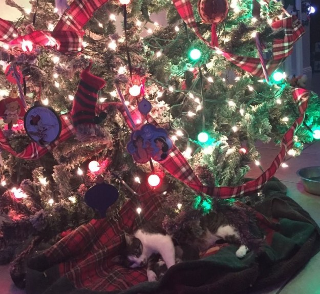 tink-chat-chatons-noel-6