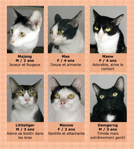 trafic-chats-fondation-bb-2