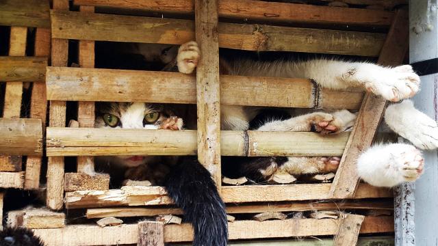 trafic-chats-fondation-bb-3