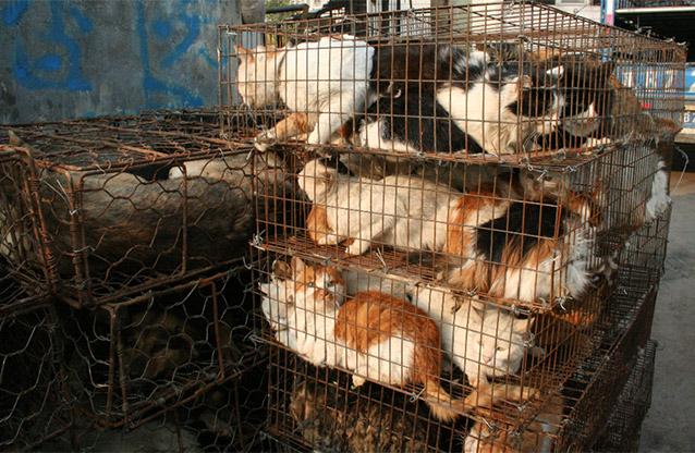 trafic-chats-fondation-bb-4