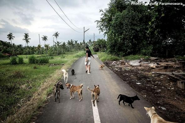 agung-bali-dogs-2