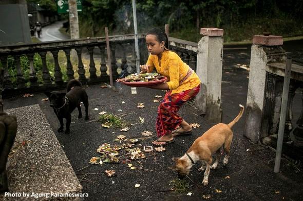 agung-bali-dogs-3