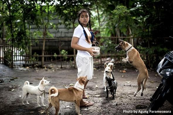 agung-bali-dogs-5