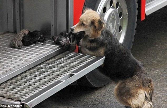 amanda-puppies-fire-1