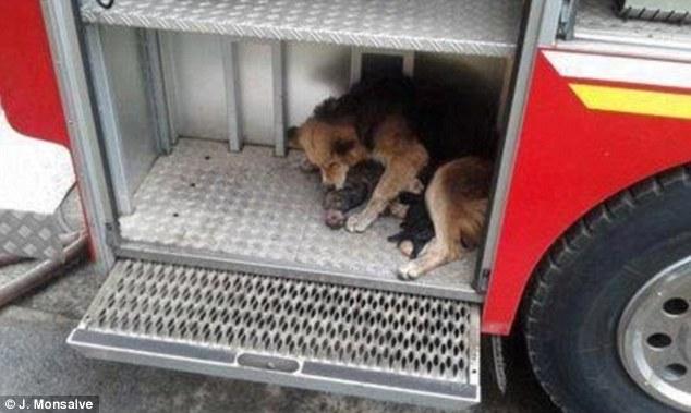 amanda-puppies-fire-4