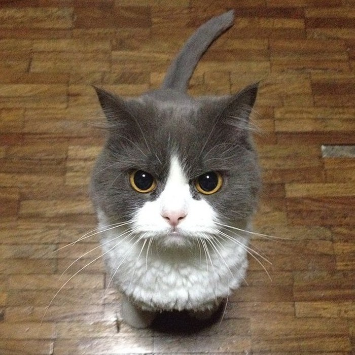 angriest-cats-4