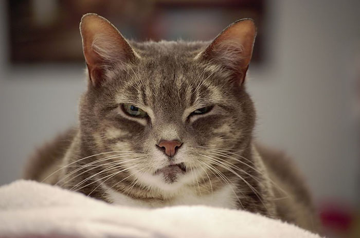 angriest-cats-5