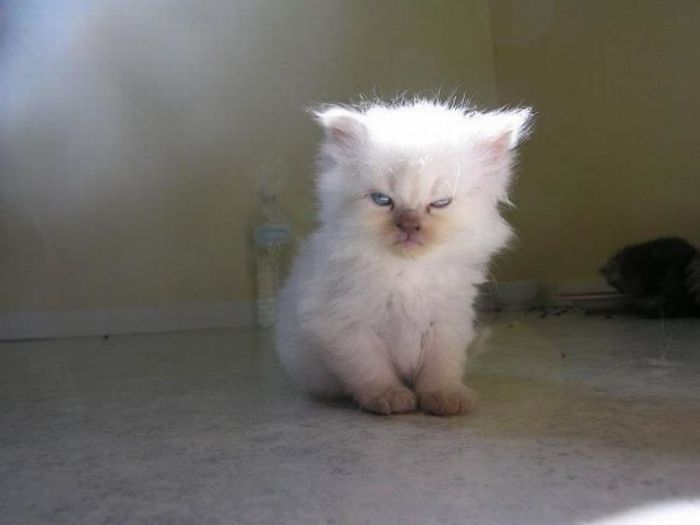 angriest-cats-8