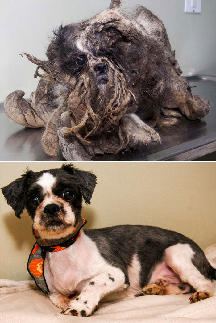 before-after-dogs-11
