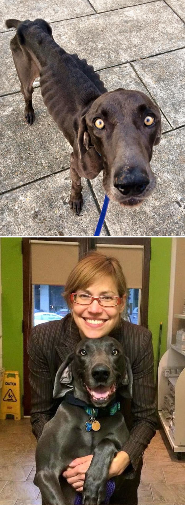 before-after-dogs-12