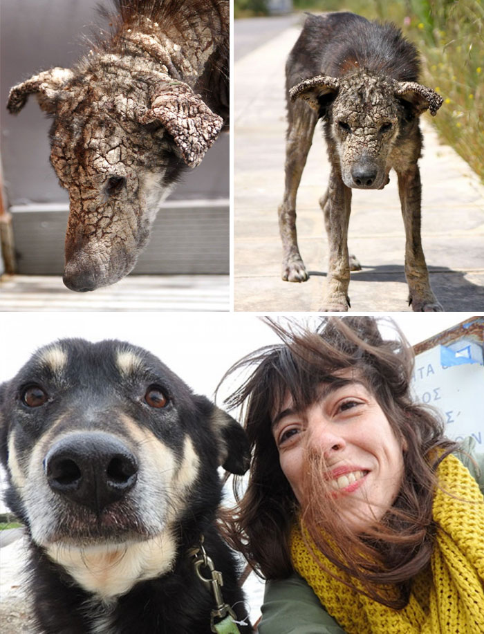 before-after-dogs-6