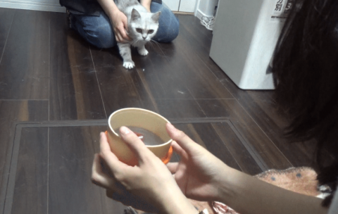 cats-smart-dogs-5