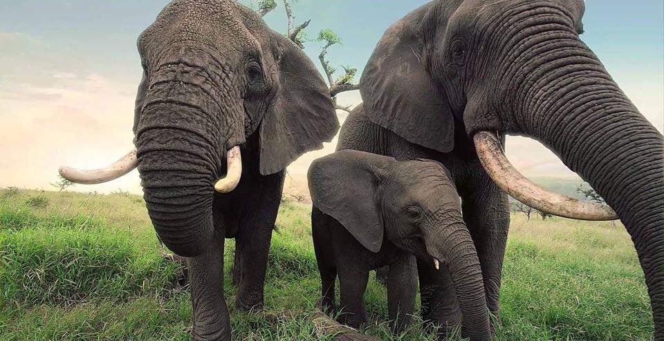 china-ivory.law-5