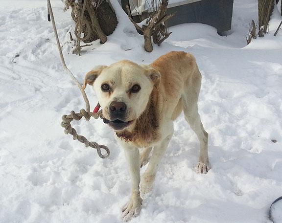 dog-chain-cold-2