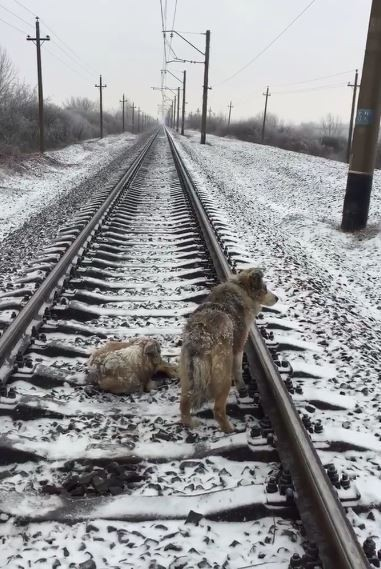 dog-train-saved-2