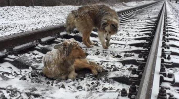 dog-train-saved-3