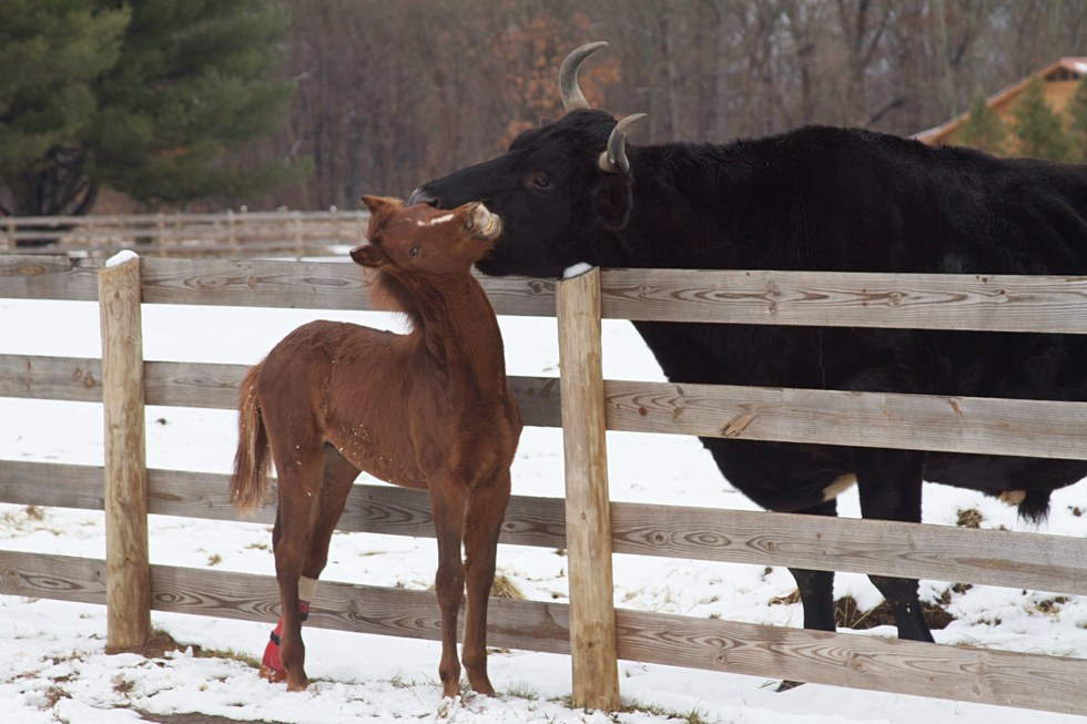 foal-without-foot-8