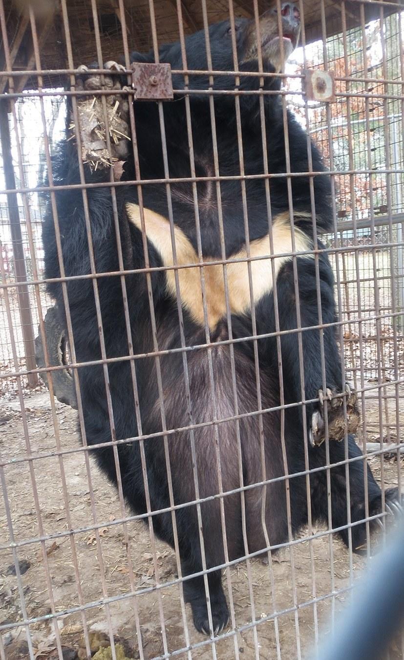 lily-ourse-obèse-zoo-2