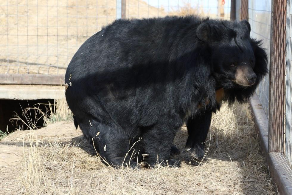 lily-ourse-obèse-zoo-5