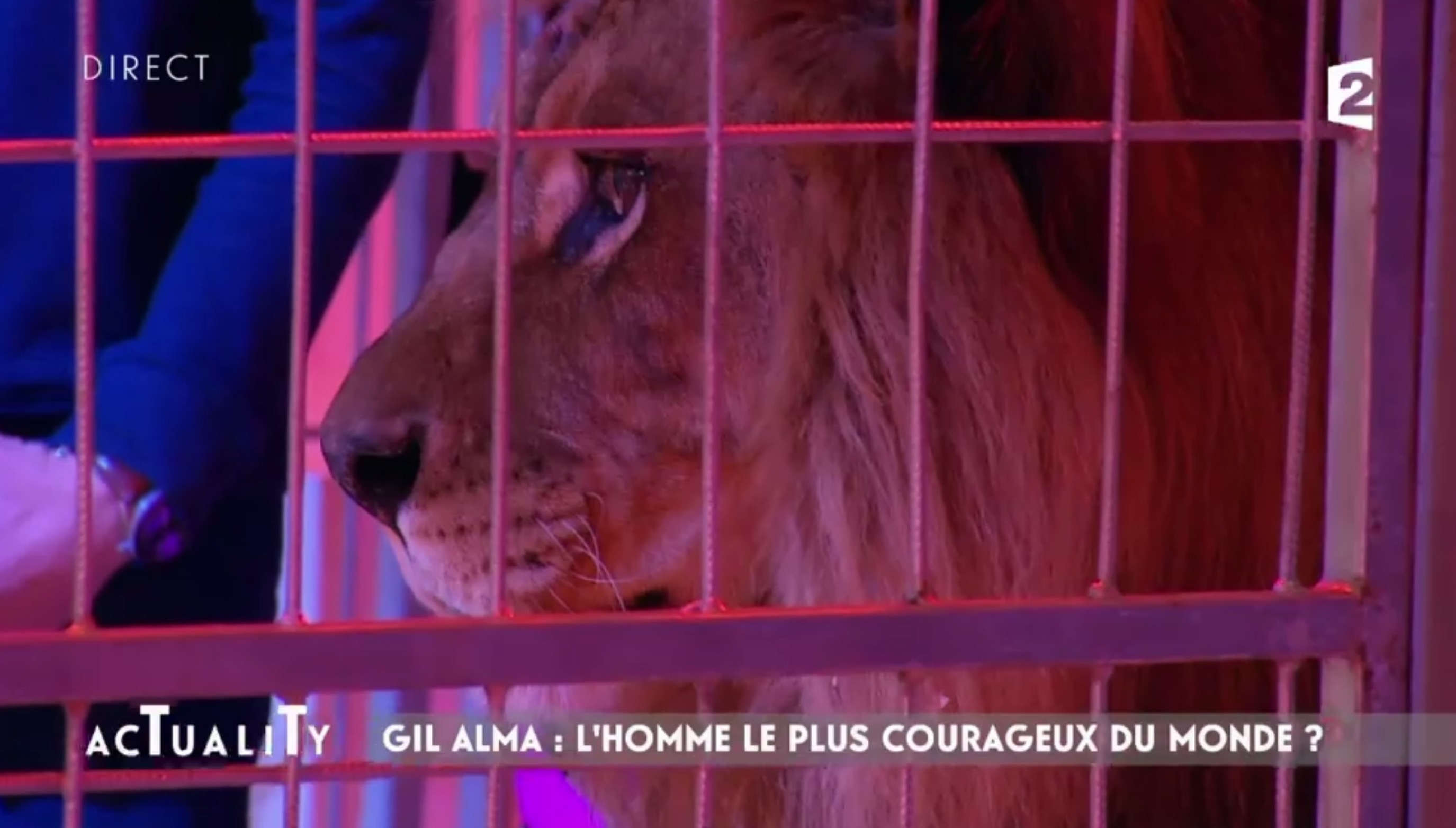 lion-france-2-actuality-barot-9