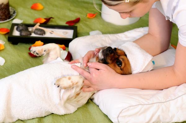 massage-canin-bienfaits-1