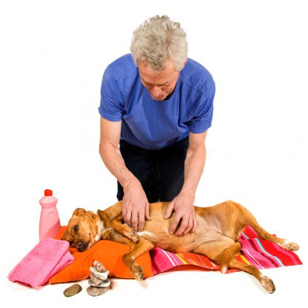 massage-canin-bienfaits-6