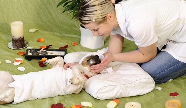 massage-canin-bienfaits-7