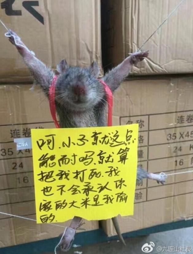 rat-supplice-weibo-chine-3