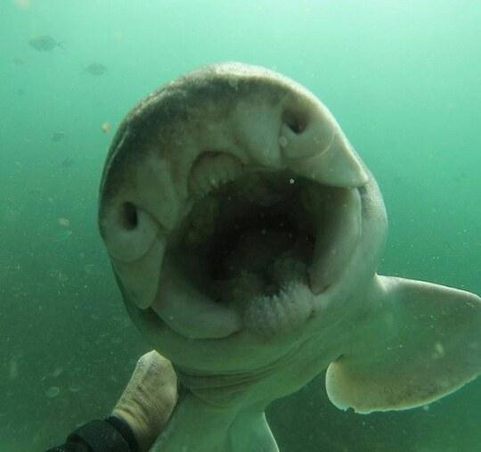 rick-shark-friend-1