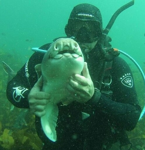 rick-shark-friend-2