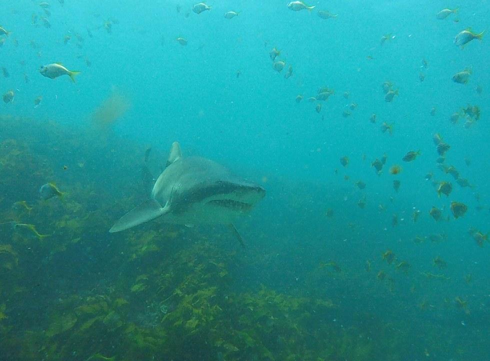 rick-shark-friend-8