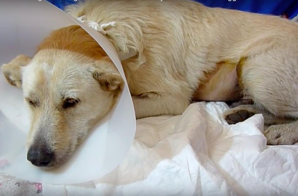 stray-dog-cancer-2