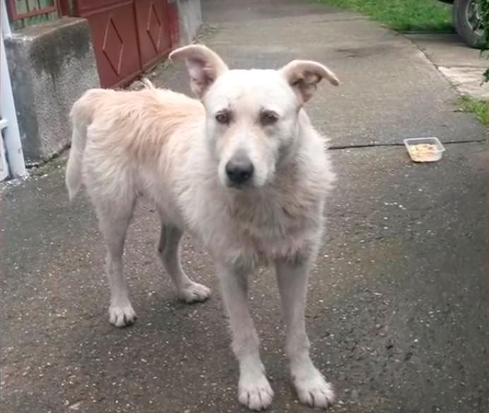 stray-dog-cancer-4