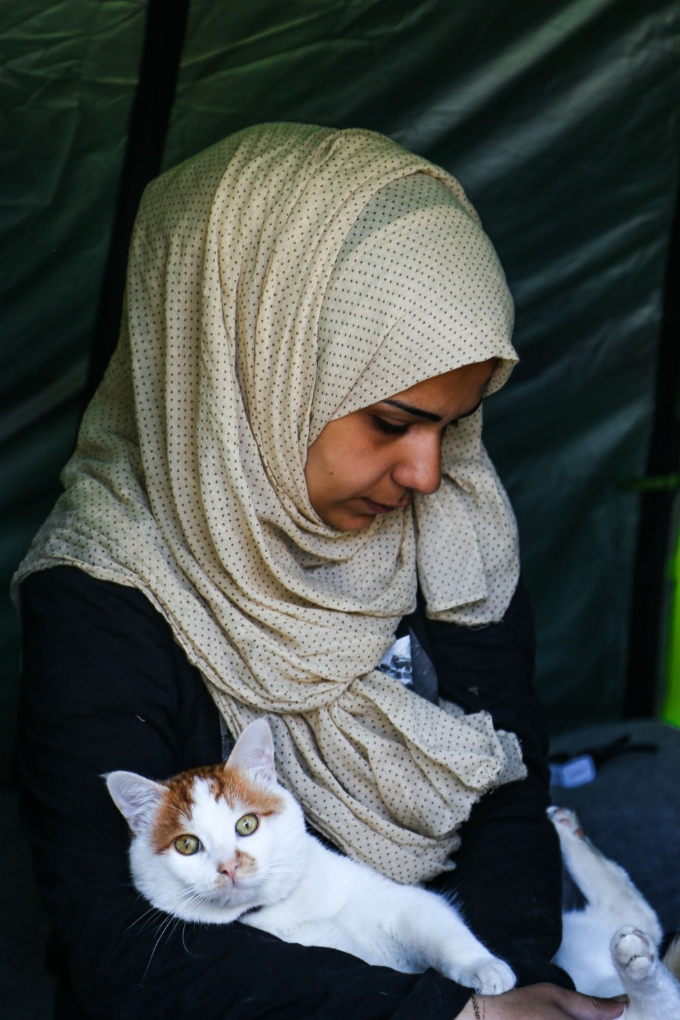 tabboush-chat-syrie-refugies-2