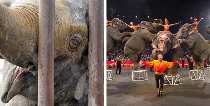 Elephants-cirque-cover1