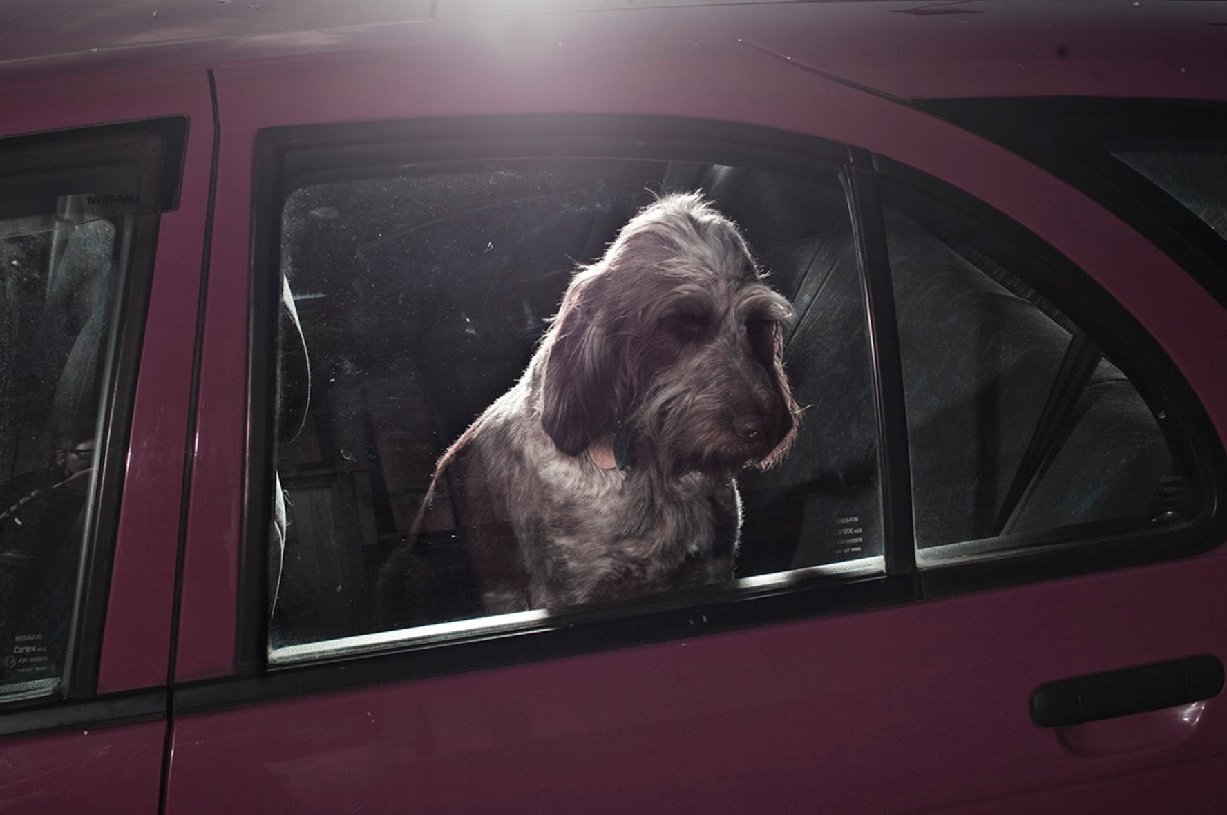 Martin-Usborne-photographe-chiens-voitures-10
